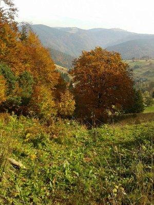 Das sagt einer, der Schwarzwald wäre schwarz! Die Farben waren der Hammer!!!