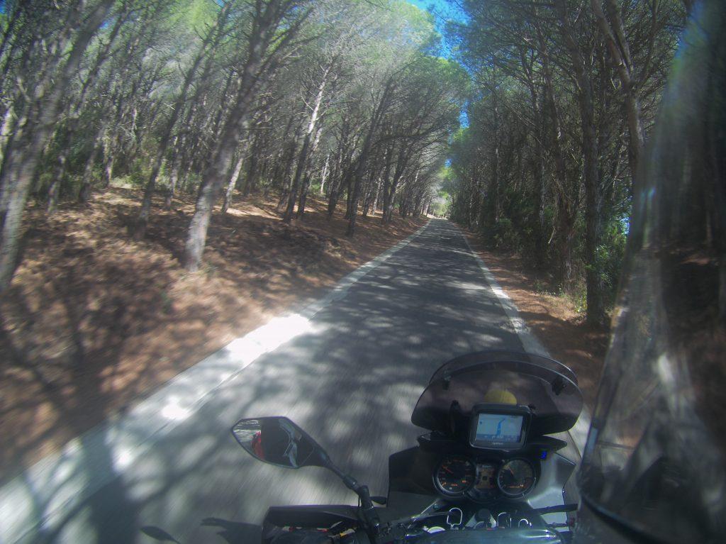 Waldsträßchen