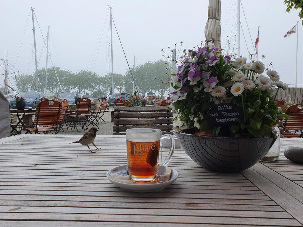 Spatz mit Tee