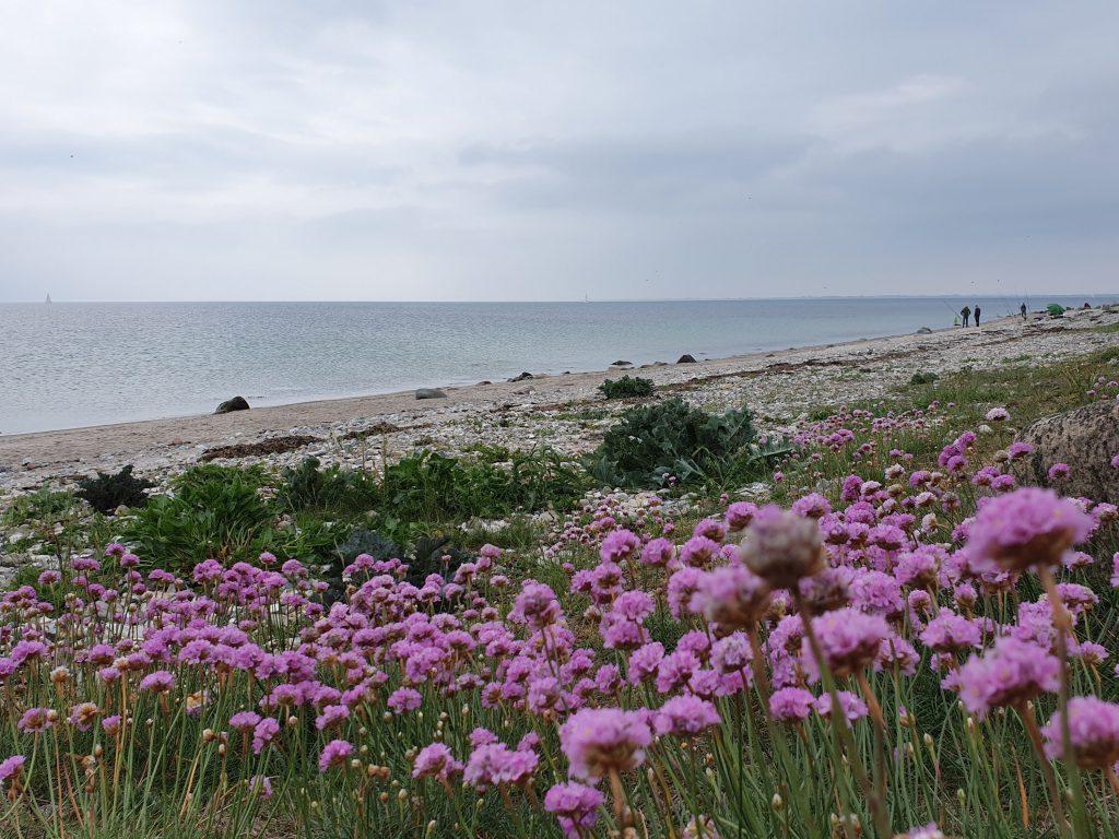 Blumenparadies am Wasser