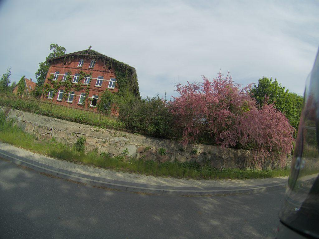Haus mit blühendem Busch