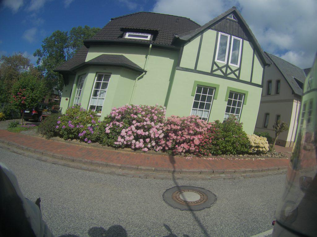 Rhododendron vor einem Haus