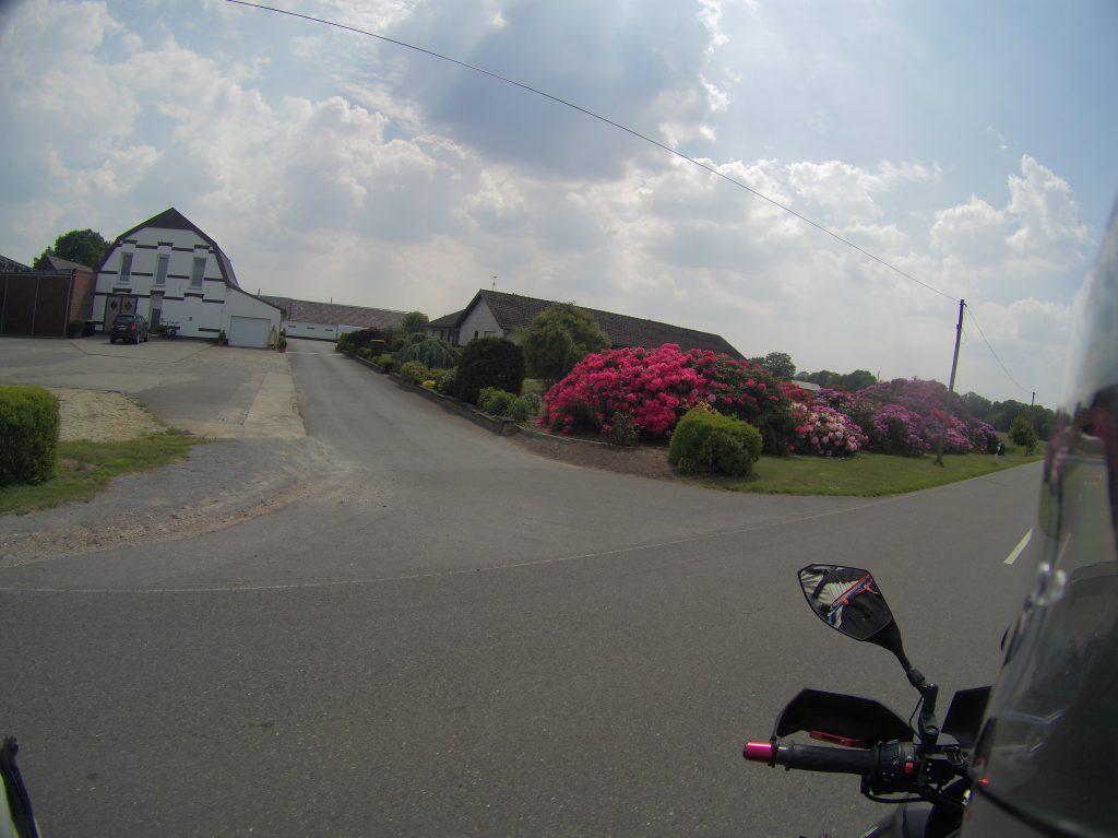 Rhododendren-Meer