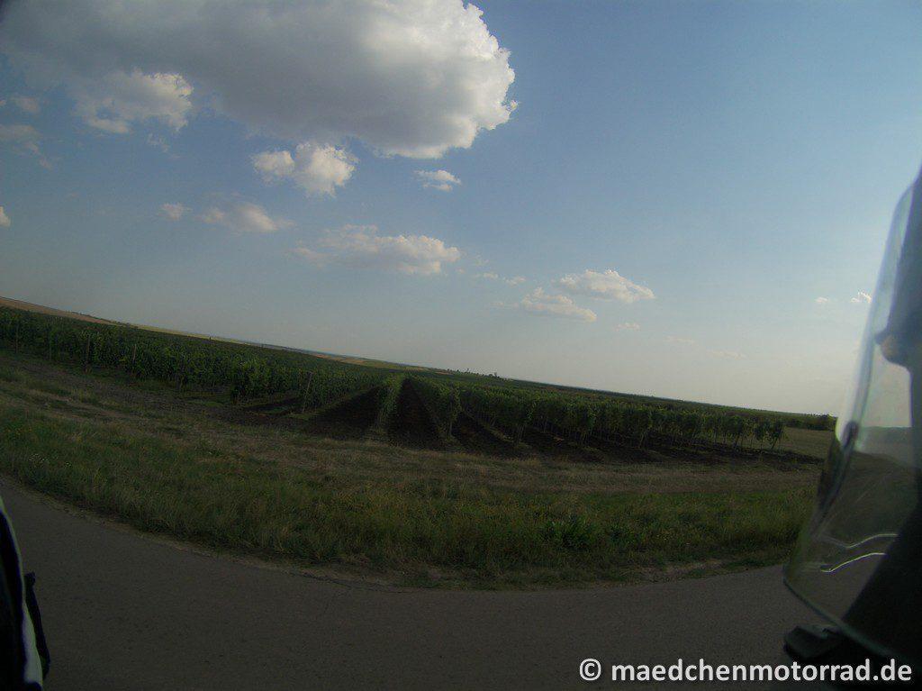 Mitten durch die Weinanbaugebiete