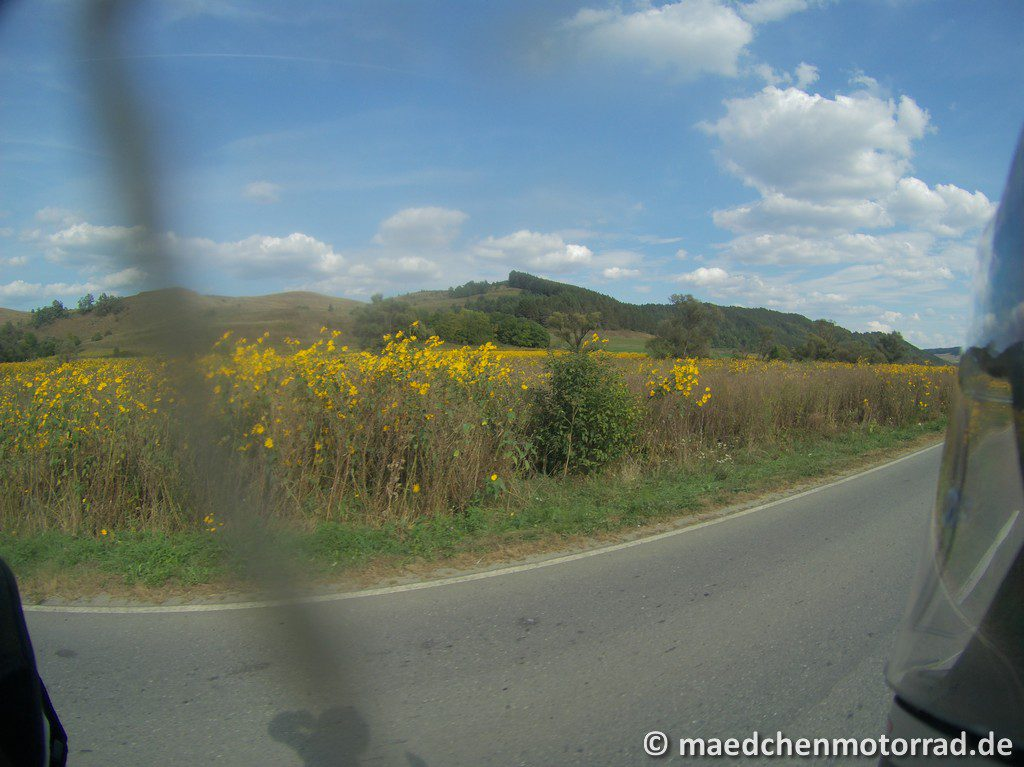 Gelbe Topinambur-Pflanzen