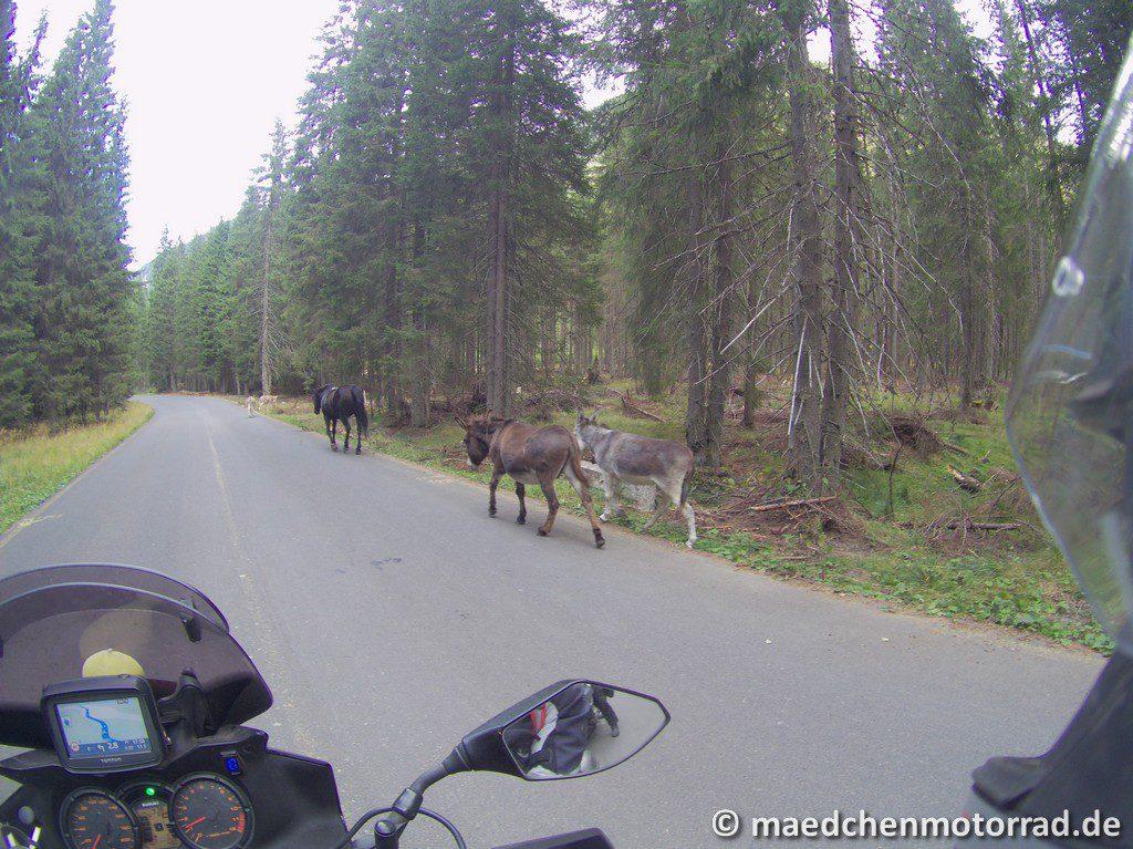 Pferd und Esel sind auch da!