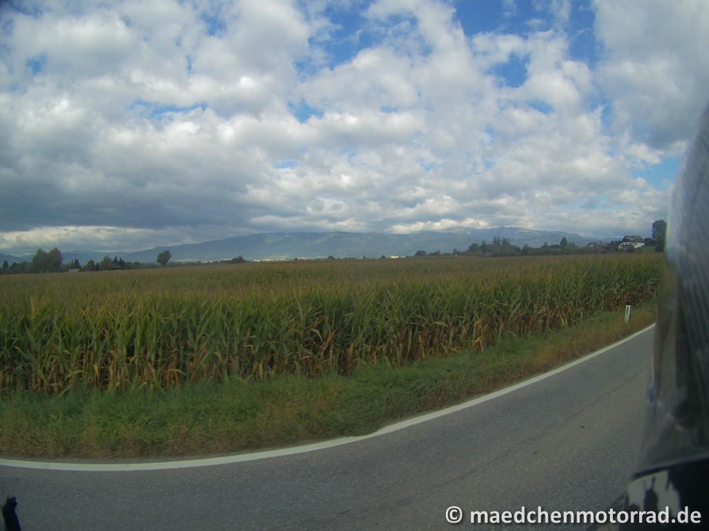 Maisfeld hinter Weißkirchen